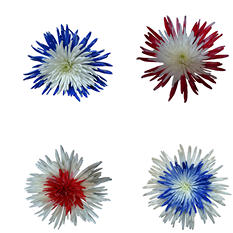 Innie/Outtie - Patriotic Colors - 60 Stems