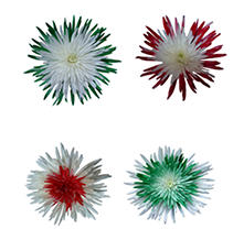 Innie/Outtie Disbuds -  Christmas Colors - 60 Stems