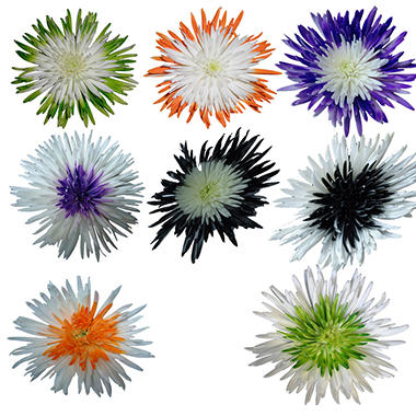 Innie/Outtie Disbuds - Halloween Colors - 60 Stems