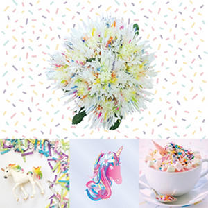 Confetti Painted Spider Mums - 60 Stems