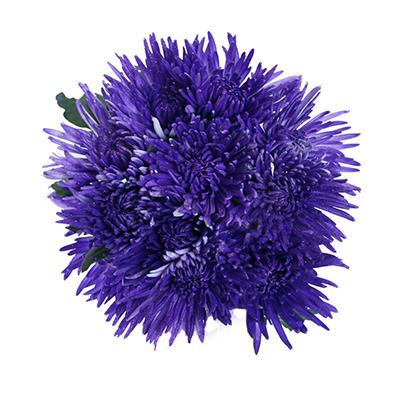 Spider Mums - Painted Glitter Purple - 60 Stems