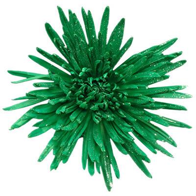 Spider Mums - Painted Glitter Dark Green - 60 Stems
