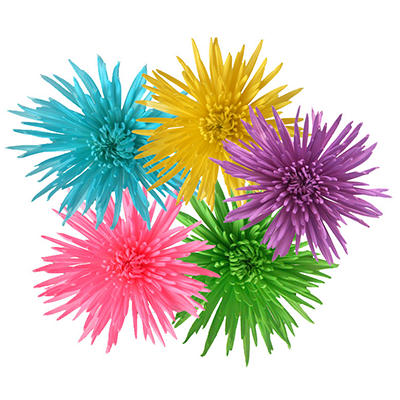 Pastel Painted Spider Mums (60 Stems)