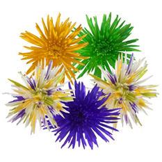 Mardi Gras Spider Mums (60 Stems)