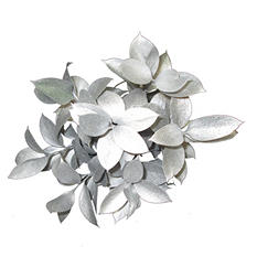 Ruscus Painted & Glittered Silver (168 Stems)