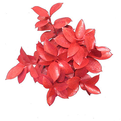 Ruscus Painted & Glittered Red (168 Stems)