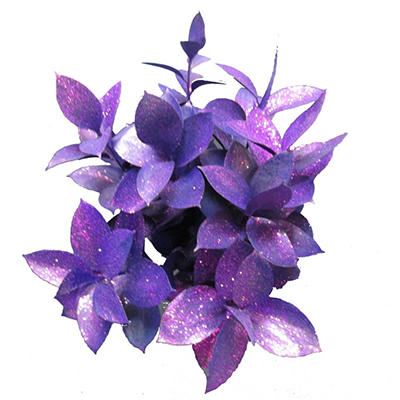 Ruscus Painted & Glittered Purple (168 Stems)