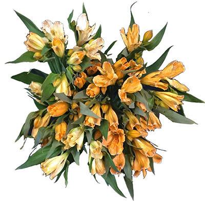 Alstroemeria Tinted Orange (60 Stems)