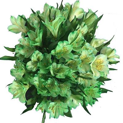 Alstroemeria Tinted Green (100 Stems)