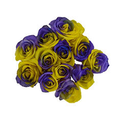 Tinted Roses Yellow and Purple (50 stems)