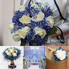 Glitter & Tinted Blue Gypsophila (60 Stems)