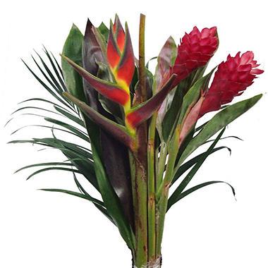 Rainforest Bouquet - 10 Bunches