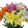Asiatic/LA Hybrid Lily - Assorted - 40 Stems