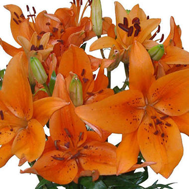 Asiatic (LA) Lilies - Orange (Choose 40 or 80 Stems)
