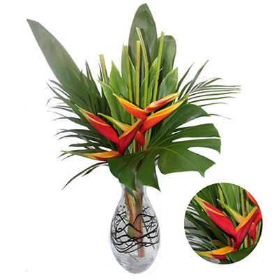 Irazu Tropics Bouquet (10 pk.)