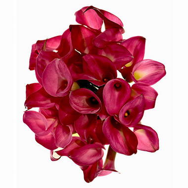 Calla Lily - Hot Pink - 60 Stems