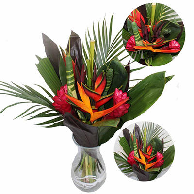 Volcano Tropical Treasures (10 pk.)