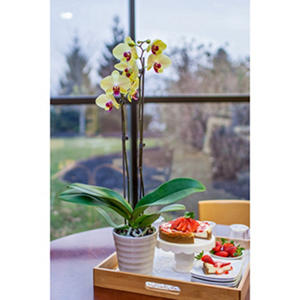"5"" Phalaenopsis Orchid in Ceramic Pot - Yellow"