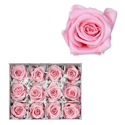 Infinite Rose - Light Pink - 12 Rose Heads