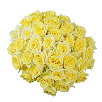 Roses - Yellow - 75 Stems