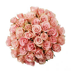 Roses - Light Pink - 75 Stems