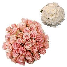 Roses - Wedding Pack Light Pink & White - 75 Stems