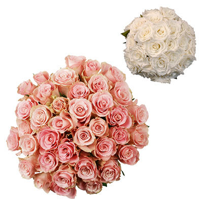 Roses - Wedding Pack Light Pink & White - 75 Stems