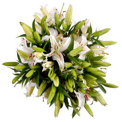 Oriental Lily  - White - 25 Stems