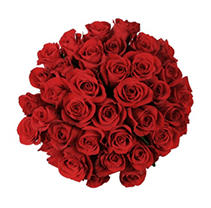 Roses - Red - 75 Stems