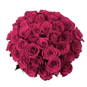 Roses - Hot Pink (75 stems)