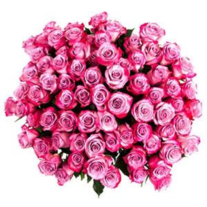 Roses - Lavender (75 stems)