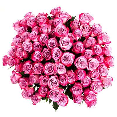 Roses - Lavender - 75 Stems