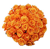 Roses - Orange - 75 Stems