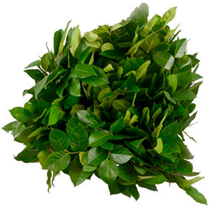 Salal - Greenery - 5 Bunches