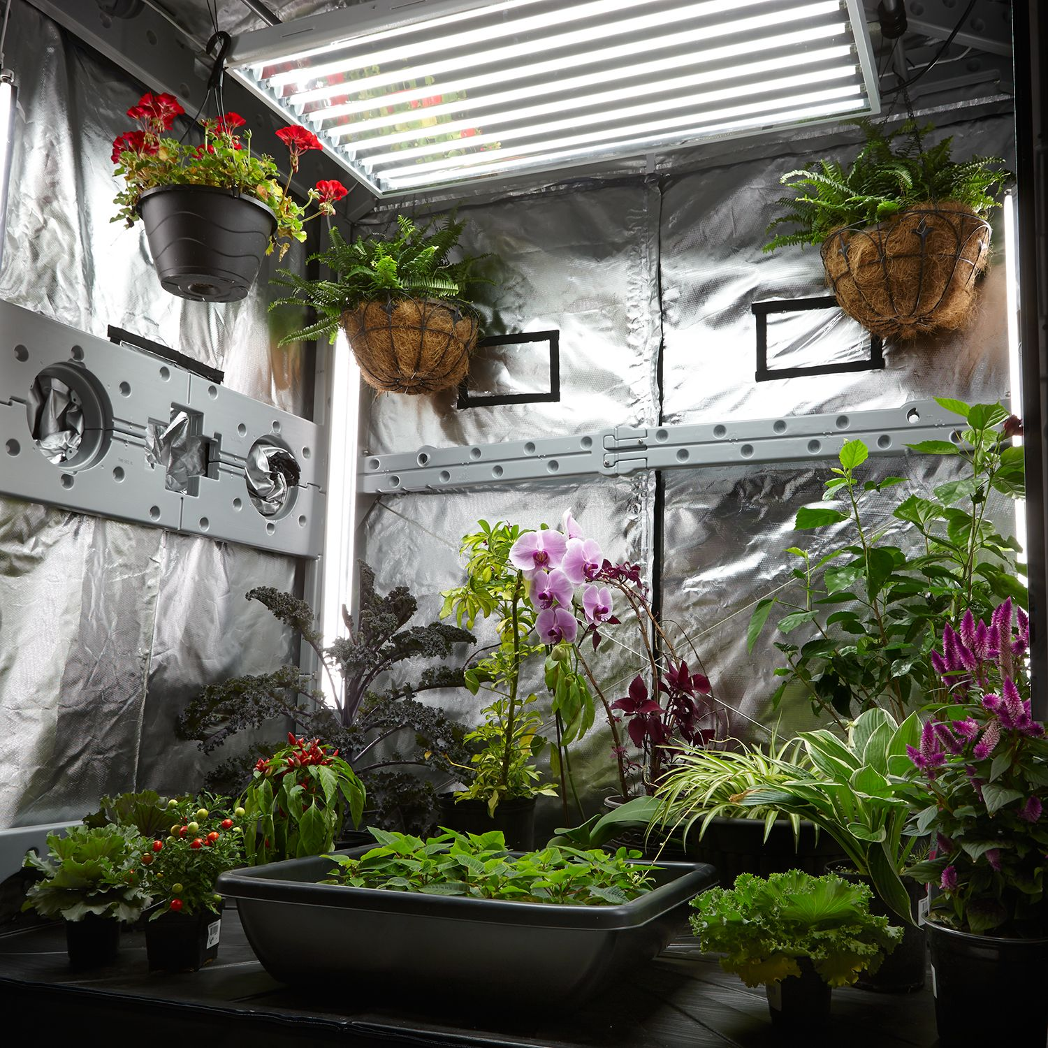 Best Vegetables To Grow In Raised Beds: Indoor Greenhouse Grow Light Tent Garden Kit Hydroponic