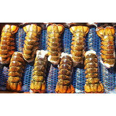 Ready Seafood Frozen Raw Maine Lobster Tails (4-5 oz. ea.,10 lbs.)