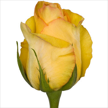 Roses - Deja Vu (100 stems)