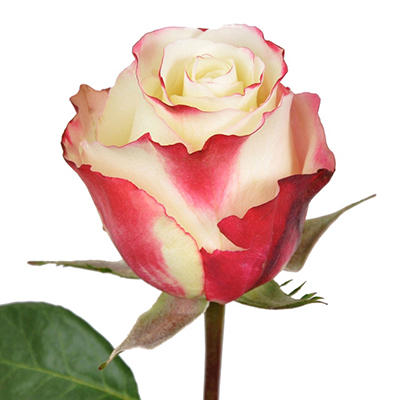 Roses - Sweetness - 100 Stems