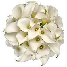 Mini Calla Lily - White  - 100 Stems