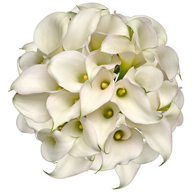 Mini Calla Lily - White  - 100 Stems