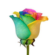 Roses - Rainbow - 100 Stems