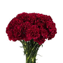 Carnations - Burgundy - 200 Stems