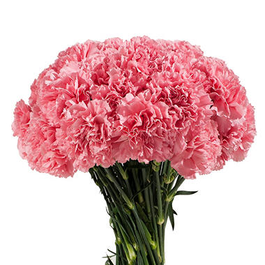Carnations - Pink  (200 Stems)