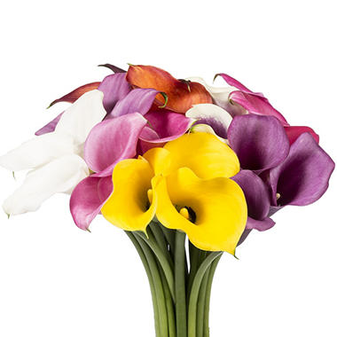 Mini Calla Lily - Assorted 50cm -  100 Stems