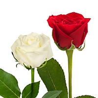 Roses - Red & White (125 stems)