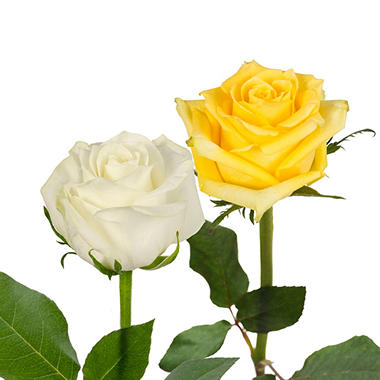 Roses, Yellow and White (125 stems)