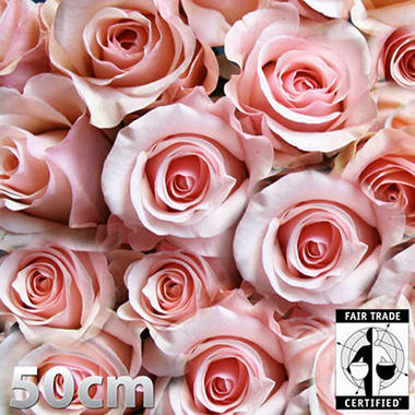 Fair Trade Roses - Pink - 48 Stems