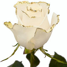 Roses – White with Gold Glitter