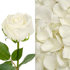 Roses/Petals Combo - White - 75 Stems