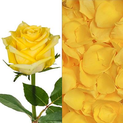 Roses/Petals Combo - Yellow - 75 Stems